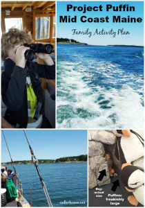 Project Puffin and Cruise - Family Activity