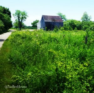 A summer view of a field in Thomaston, Maine by sadlerhouse.net